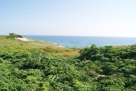 Punta Sur: bellos colores