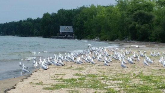 Pelee Places: beach walk