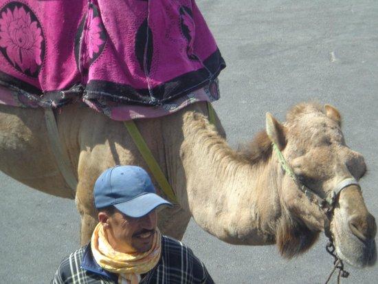 Anezi Tower Hotel : nawet wielbłąd się znalazł