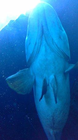 Georgia Aquarium: The Belly of a Whale Shark