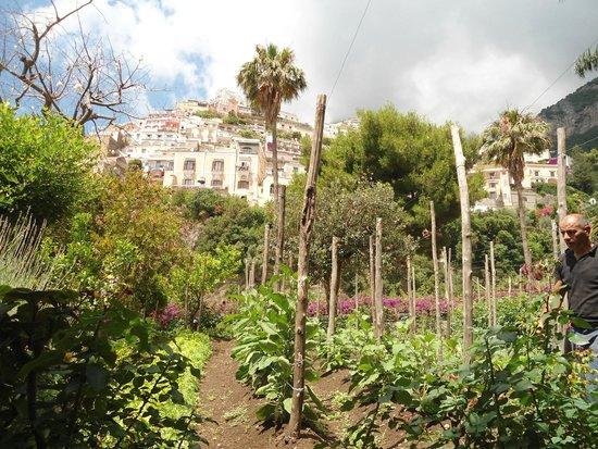 Hotel Palazzo Murat: huerta organica