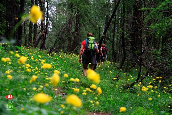 Holimites - Holiday into the Dolomites: Dolomites is also Trekking through wonderful forests