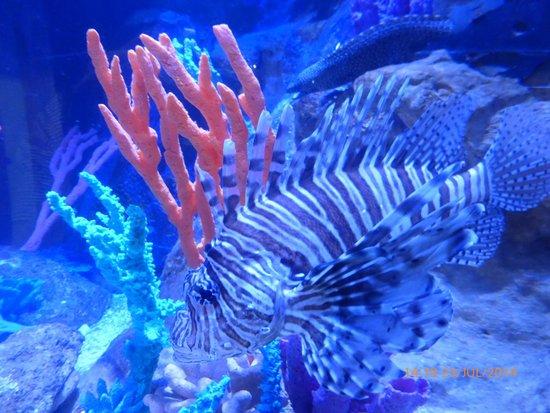 Deep Sea World: Fish