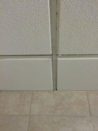Crowne Plaza Harrisburg-Hershey : Moldy ceiling tiles