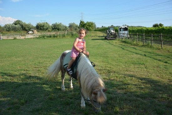 Agriturismo Il Capannone: ampio prato del maneggio
