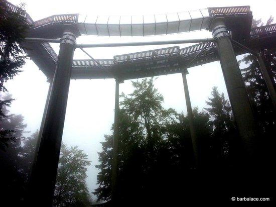 Waldwipfelweg: Tree Top Walk