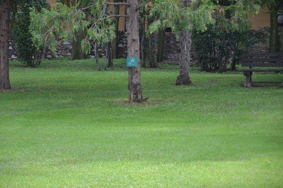 Villa dei Cedri: Lo scoiattolo nel parco (al centro foto)