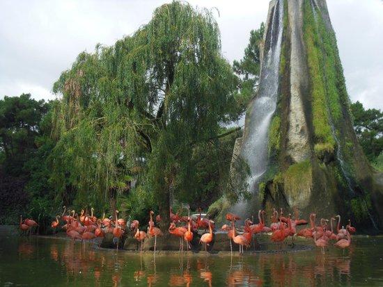 Zoo de la Palmyre : flamant