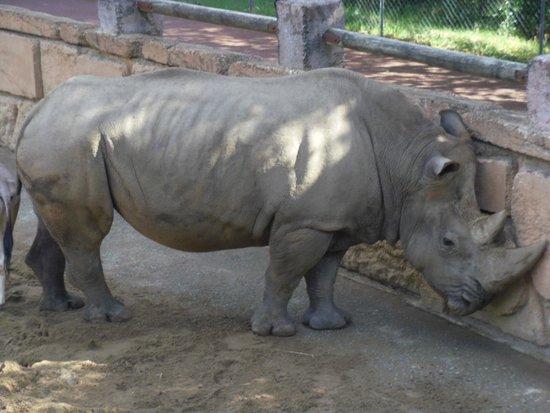 La Palmyre Zoo : rhino