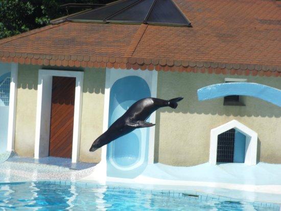 La Palmyre Zoo : spectacle d'otarie