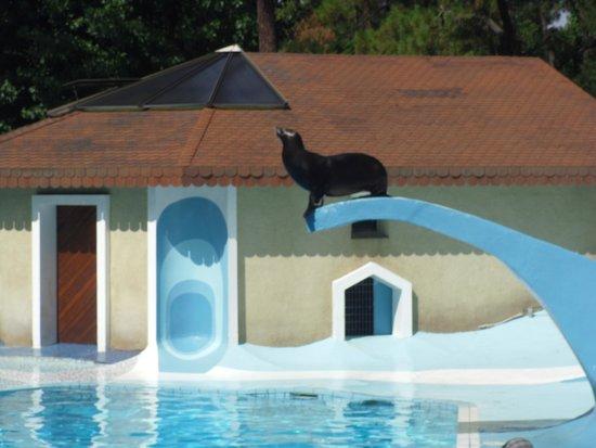 La Palmyre Zoo : spectacle otarie