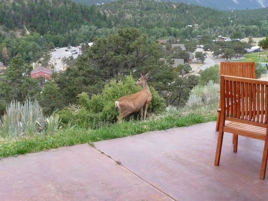 Mount Princeton Hot Springs Resort: Wildlife outside our room