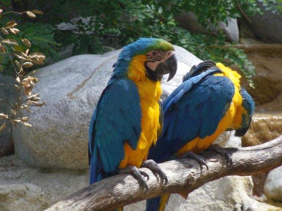 La Palmyre Zoo : ara