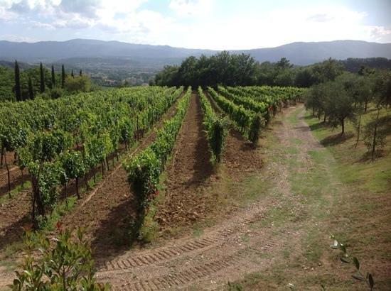 Agriturismo Savernano: vineyards everywhere