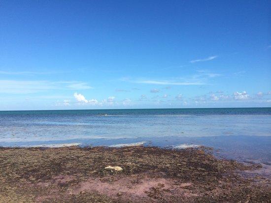 Bonefish Resort: Seaweed beach