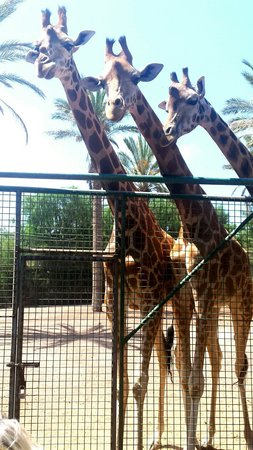 Broncemar Beach: Recommend  a visit to Oasis zoo.