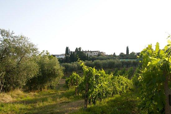 Villa Talente: View from the vineyard on the villa