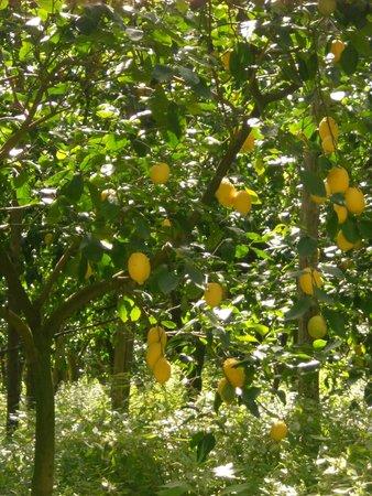 The Secret Garden Relais: lemon trees in the garden