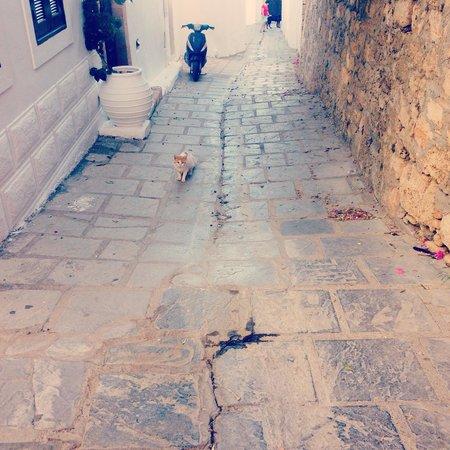 Rafael Studios: Cats