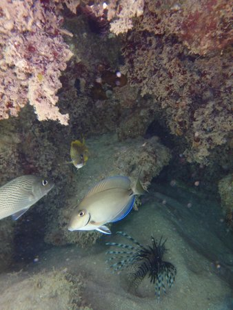 Grand Bahia Principe El Portillo: Some fish we seen