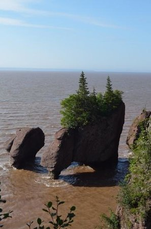 Roads to Sea Guided Tours : Hopewell Rocks Tide UP