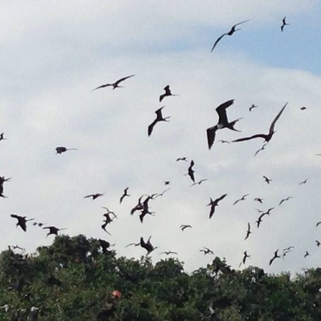 Bahia de Caraquez, Ekvador: Hundreds of frigate birds