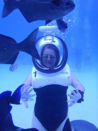 Aquanautas : Los peces pasando