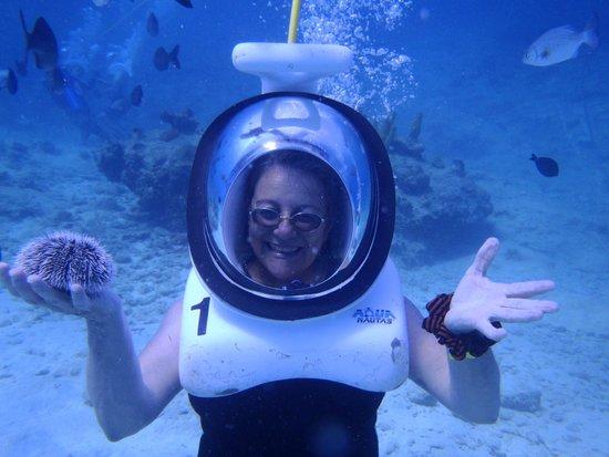 Aquanautas : acuanautas junio 2014-erizo blanco