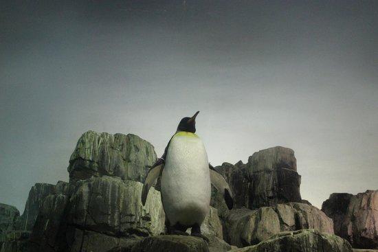 Central Park Zoo: пингвины