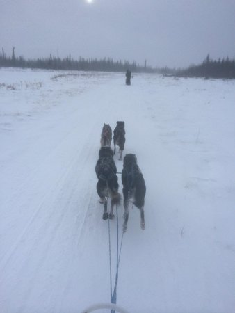 Paws for Adventure: The Trail