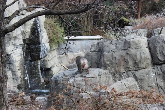 Central Park Zoo : 5