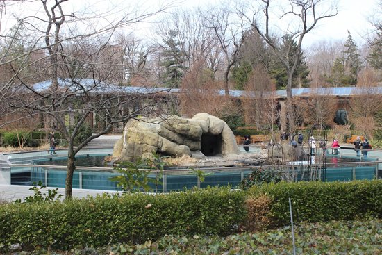 Central Park Zoo : 11