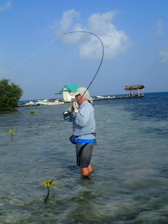 Isla Marisol Resort: Bonefish on a fly