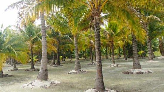 Isla Marisol Resort: Resort Grounds