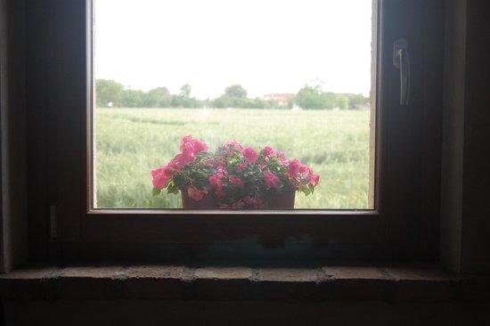 B&B Casa della Fornace : View from a window