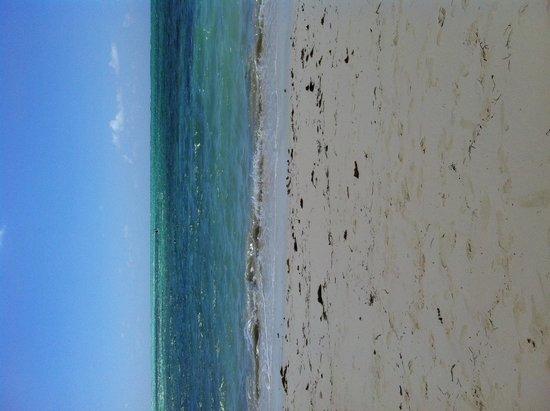 Viva Wyndham Fortuna Beach: The beach