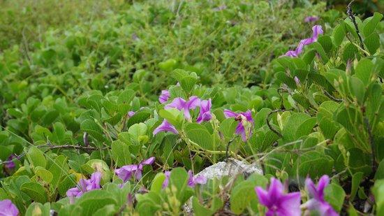 Bahia Honda State Park and Beach: Lovely Flowers