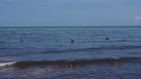 Bahia Honda State Park and Beach: Wildlife