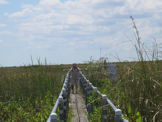 Best Airboat Rides Everglades Picture Of Airboat In
