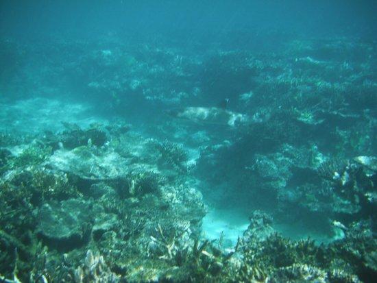 Qamea Resort And Spa Fiji: White-Tipped Reef Shark.