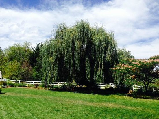 Country Willows Bed and Breakfast Inn: Beautiful willow tree