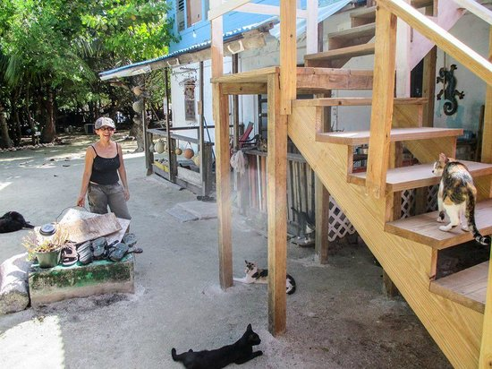 PAUSE Hostel : The wonderful Madi and some of her rescues on the grounds, out of picture to left is the sea