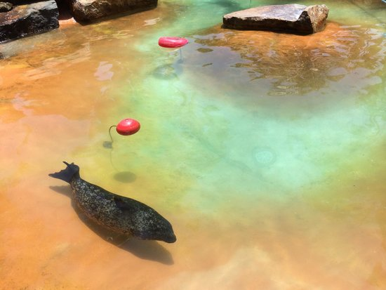 Bahia Resort Hotel : Seal at the resort