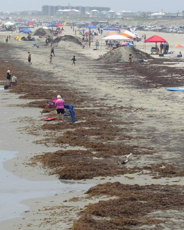 Port Aransas Beach: Seaweed on the beach