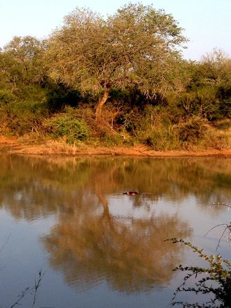 Kapama Karula : By the watering hole