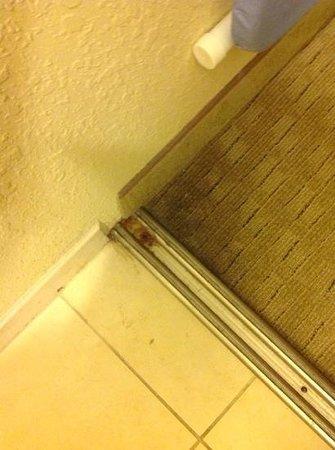 Homewood Suites by Hilton Tampa-Port Richey : closet