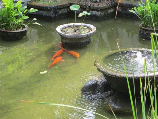 Natah Bale Villa : landscape pools