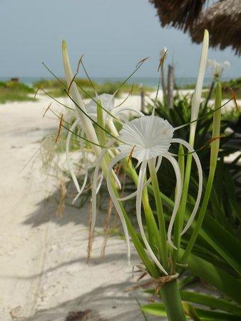 Xaloc Resort: flower near the beach