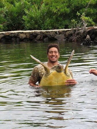Swimming with Turtles: baby turtle