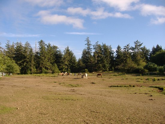 Sea Ranch RV Park & Stables: Horse Corral